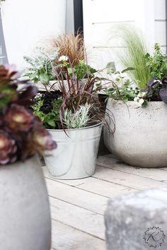 KUKKALA #kesäkukat #summerflowers Container Plants, Container Gardening, Summer Plants, Garden Pots, Planting Flowers, Outdoor Living, Outdoor Ideas, Outdoors, Autumn