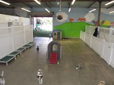 Dog Boarding Facility Designs | Small Side Indoor Playground