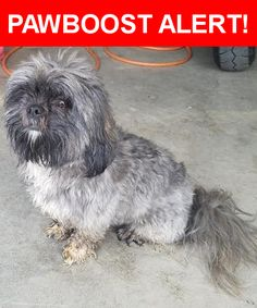 Is this your lost pet? Found in Indianapolis, IN 46259. Please spread the word so we can find the owner!  Description: Gray and Black Lhaso Apso.    Nearest Address: Five Points and Southport Roads