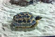 Genova 2012 - Picture of Genoa Aquarium, Genoa