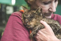 A Sickly Cat Riddled With Mange Begins to Heal After Receiving a Loving Hug from a Caring Woman