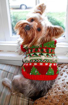Holiday Dog Sweater Pattern Yorkie Merry Happy Christmas Day Card Puppy Holiday Dogs Santa Claus Dog Puppies Xmas #MerryChristmas Yorkshire Terrier