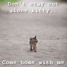 Lost kitty....
