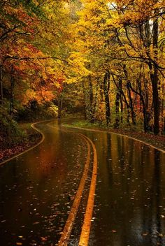 Fall road trips are the best!