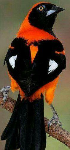 Orange and black! My high school colors!