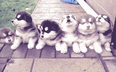cute dogs tumblr - Google Search