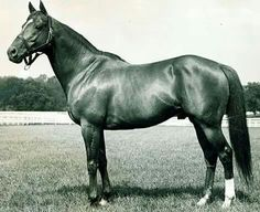 Whirlaway won the Preakness by 5 lengths, despite being miles behind the others in the early stages. I had a picture of him in my room the whole time I was growing up . that was one of the things that got me interested in the Triple Crown All The Pretty Horses, Beautiful Horses, Preakness Stakes, Triple Crown Winners, Sport Of Kings, Thoroughbred Horse, All About Horses, Racehorse, Horse Breeds