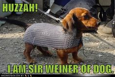 funny dog pictures - HUZZAH! I AM SIR WEINER OF DOG.