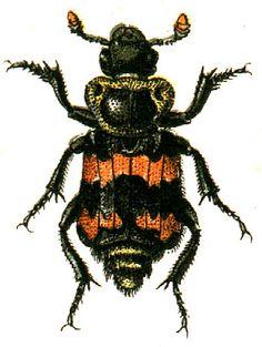 Free Halloween Clip Art - Orange and Black Bugs - The Graphics Fairy