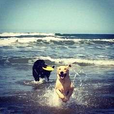 Thor.  5 month old lab went to the beach for the first time :)