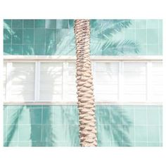 Street vibes 🌴👌 Pic by 📷 . Matthieu Venot, Miami, Plants Are Friends, Mini Ma, Go Green, Street Photography, Minimalism, Indoor, Interior