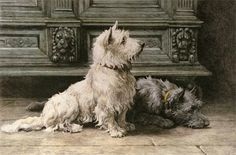 Terriers Vintage Dog Image Poster - Shop Vintage Dog Image Poster created by KathiAnn. Personalize it with photos Cafe Posters, Bull Terrier Dog, Cairn Terriers, Scottish Terriers, Norwich Terrier, West Highland Terrier, White Terrier, Vintage Dog, Vintage Black