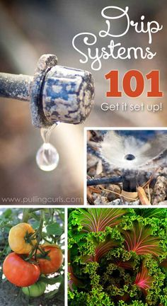 Drip irrigation is an easy, effective way to water your plants without wasting our most precious resource, water.  Find out what you need and how to attach it all in this post that shows you why you should use drip irrigation.