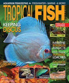 Do you have a 10-gallon tank and want to keep cichlids?  Wondering about biofiltration basics for your marine tank?  Want some advice on keeping gorgeous Discus?  Check out the December issue of Tropical Fish Hobbyist.  This month's issues helps with choosing fish of various kinds including eartheaters and wrasses.  You can also learn about the rare red-tailed squirrel loach.  If you get our print copy, you also receive a free TFH calendar!