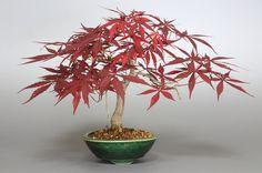 www.e-bonsai.org