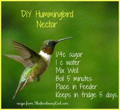 Humming bird Nectar DIY hummingbird nectar is so easy to make and less expensive than store bought.DIY hummingbird nectar is so easy to make and less expensive than store bought. Timothy Green, How To Attract Hummingbirds, Attracting Hummingbirds, Hummingbird Garden, Hummingbird Feeder Recipe, Homemade Hummingbird Food, Hummingbird Sugar Water, Recipe For Hummingbird Nectar, Hummingbird Mixture