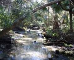 If you want to see Real Florida, skip Disney World and go paddling on the Chassahowitzka, known locally as the Chaz.