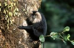 Indian Sloth Bear - Bing Images