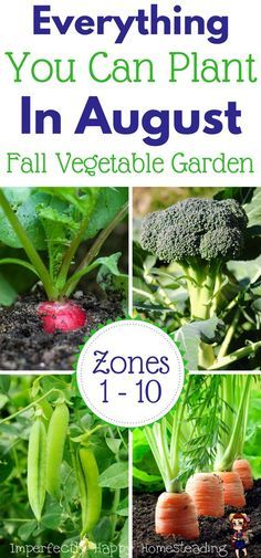 Vegetables Gardening Everything you can plant in August for a Fall Garden. - What seeds to plant in August for an awesome Fall garden. Zone 9 and 10 listed. Have your best vegetable garden ever! Veg Garden, Edible Garden, Garden Beds, Garden Club, Planting A Garden, Veggie Gardens, Garden Tools, Gardening Zones, Gardening Tips