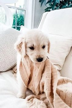 Super Cute Puppies, Cute Baby Dogs, Cute Little Puppies, Cute Dogs And Puppies, Cute Little Animals, Cute Funny Animals, Doggies, Puppies Puppies, Free Puppies