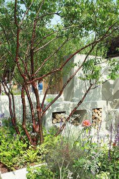 Tuin met verhoogde borders. Meerstammige Prunus #ibiza #gardendesign#style