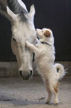 llbwwb:  For the horse lovers :) (via New friends by Nanio Pixdaus)