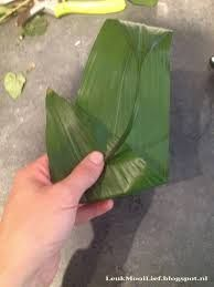 Imagini pentru aspidistrablad vouwen