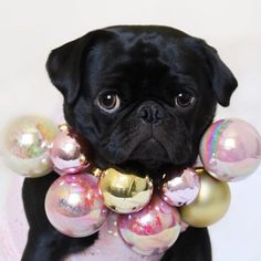 Bring some bling to Christmas! Photo by @gigi_thepug_ Want to be featured on our Instagram? Tag your photos with #thepugdiary for your chance to be featured.