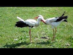 YouTube Bird, Animals, Youtube, Animales, Animaux, Birds, Animal, Animais, Youtubers