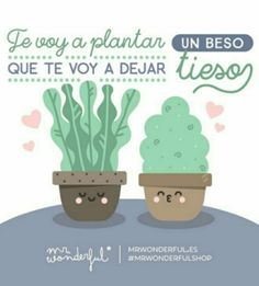 Frase Mr. Wonderful (553)