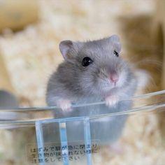 小動物 かわいい - Yahoo!検索(画像)
