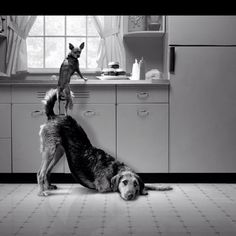 This sooo made me laugh . . . critters are smarter than we give them credit for sometimes.