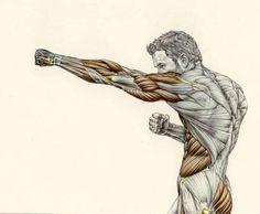 Frédéric Delavier. Art Work. Muscular Anatomy. Boxer Power Punch. #FredericDelavier #Frederic #Delavier #Anatomy #Art #Tutorial #Guide #Muscular #Punch #Power #Ecorche