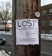 """Amusing """"Lost"""" posters, etc., by Phil Jones Funny Street Signs, Funny Signs, Funny Ads, Phil Jones, Funny Posters, Paper Strips, Lost & Found, Funny Photos, Funny Images"""