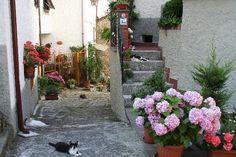 cats of Tuscany | Photos Bagni di Lucca - Images de Bagni di Lucca, Province de Lucques ...