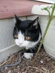 Grumpy Cat's brother #Pokey #Photo. For more Grumpy Cat stuff, gifts, and meme visit www.pinterest.com/erikakaisersot