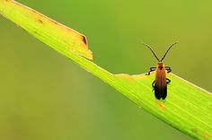 Superb Macro Bug Pictures   OMG Amazing Pictures - Most Amazing Pictures on The Internet