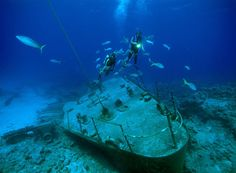 diving pictures - Google Search