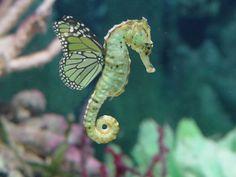 Seahorse fairy...WOW!