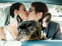 Dog Wedding, Wedding Poses, Wedding Ideas, Couple Photography, Wedding Photography, Dog Training Courses, Photos With Dog, Cute Baby Dogs, Wedding Images