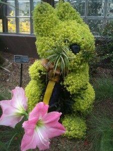 Bunny Topiary. Callaway Gardens
