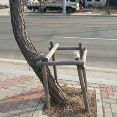 People: Grow this way  #Tree: Not happening