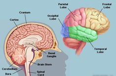Can Your Brain Be 'Full'?