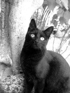 Le marquoir d'Elise, Salem