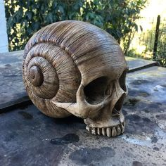 Skull, snail shell sculpture from Darlene the link no longer works but the sculpture is great. Snail Shell, Human Skull, Crystal Skull, Skull And Bones, Skull Art, Wood Carving, Dark Art, Wood Art, Sculpting