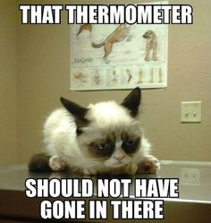 Grumpy kitty... For the best humor pictures visit www.bestfunnyjokes4u.com/lol-funny-cat-pic/