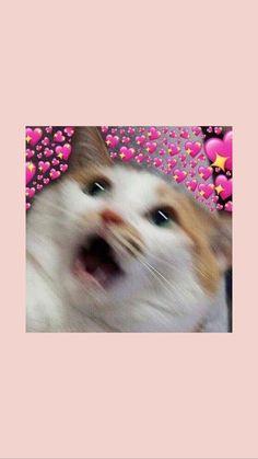 Source by ritusinghk videos wallpaper cat cat memes cat videos cat memes cat quotes cats cats pictures cats videos Vans Wallpaper, Tier Wallpaper, Cute Cat Wallpaper, Animal Wallpaper, Disney Wallpaper, Cat Phone Wallpaper, Ios 10 Wallpaper, Aztec Wallpaper, Screen Wallpaper