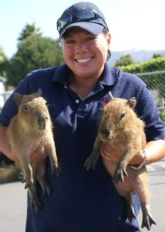 Chip and Dale (capybara)