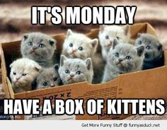 It's Monday Have a Box of Kittens #catoftheday