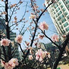 "#cherryblossom#spring#warm#warmweather#flowers#springflowers#bluesky#instaflower#instaspring#instasky#instapic#instagram#instadaily#instaphoto#iphone6s#iphone6scamera#southkorea#korea#seoul#citylife by bondhair Follow ""DIY iPhone 6/ 6S Cases/ Covers/ Sleeves"" board on @cutephonecases http://ift.tt/1OCqEuZ to see more ways to add text add #Photography #Photographer #Photo #Photos #Picture #Pictures #Camera #Only #Pic #Pics to #iPhone6S Case/ Cover/ Sleeve"